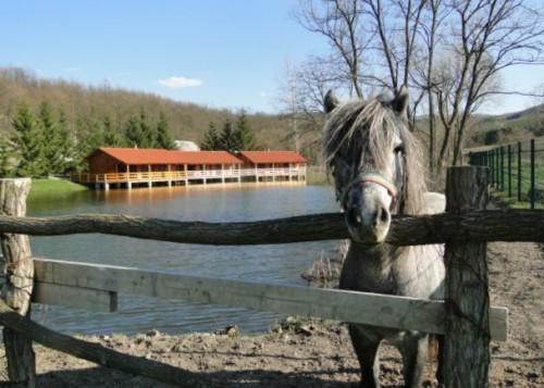 Tóparti Vadász és Turistaszállás Krakkópuszta Varga Tanya - szép kártya elfogadóhely